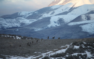 Deer-in-west-pasture-resize