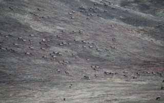 Elk-on-the-Butte-resize