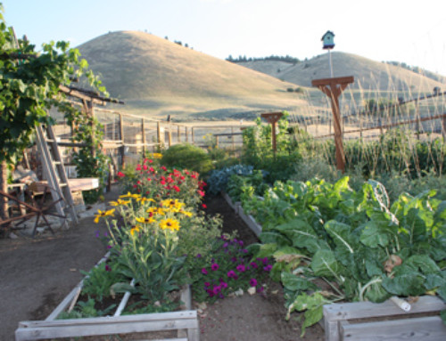 The payoff of preparation for another growing season – Entry #221