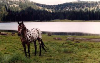 Mustang-Resize3