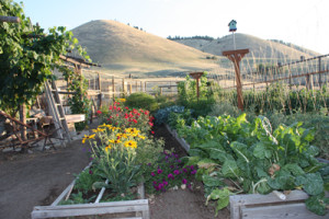 Garden-in-bloom-resize