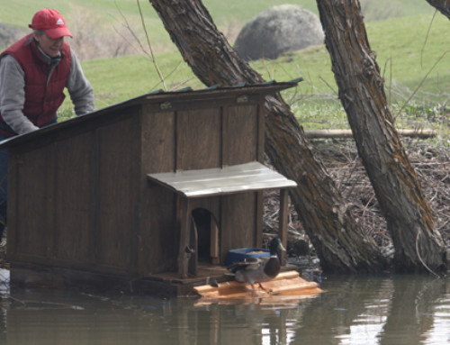 Nancy's floating duck house – Entry #193