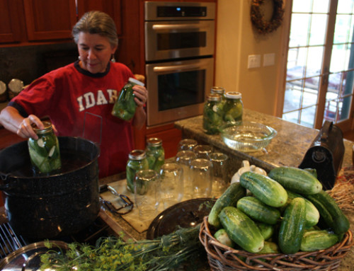 From the garden to the pantry – Cucumbers to pickles – Entry # 108