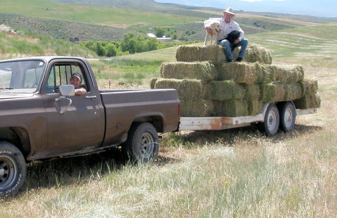 Picking up our first field of hay