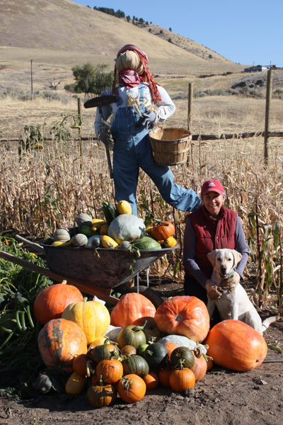 pumpkin-harvest-resize1
