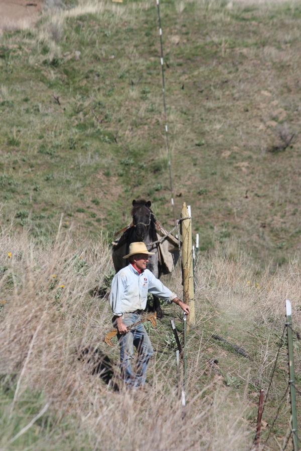 Walking the Fence resize